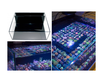 High-quality glass tank for coral breeding.