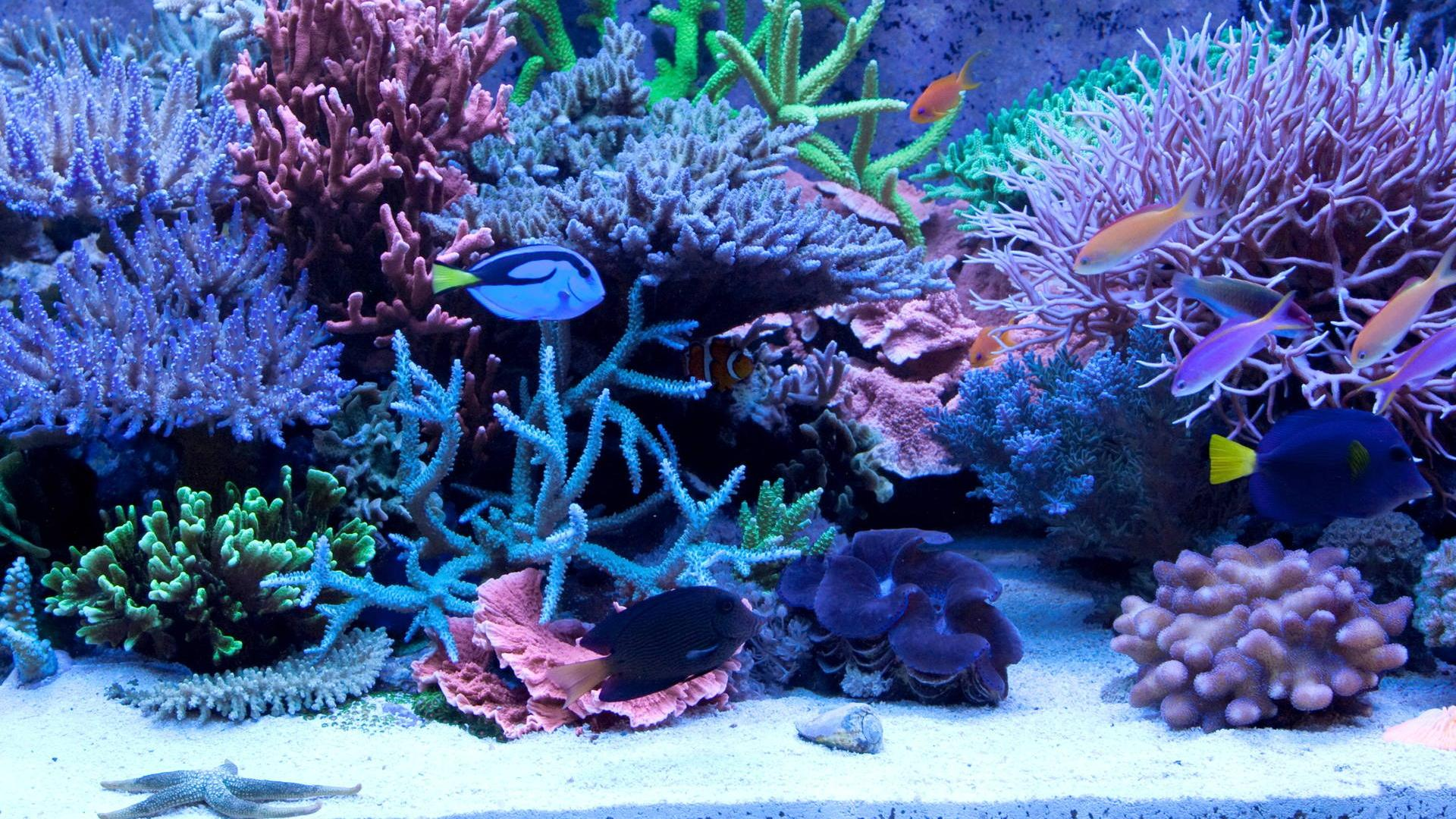 Home preis aquaristik relaunched for Aquaristik katalog
